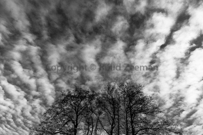 boomtoppen met wolken